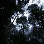 Qda. El Oso (Ruta La Mucuy - Lag. La Coromoto)