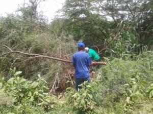 Las cuadrillas iniciaron el desmalezamiento, remoción de escombros y desechos en el rio Coro. (Foto / Ennys Amaya)