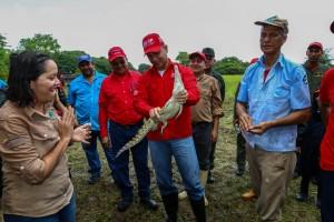 El ministro Velásquez Araguayán indicó que durante el Gobierno Revolucionario se han liberado más de 9 mil caimanes del Orinoco. (Foto / Harrison Ruíz)