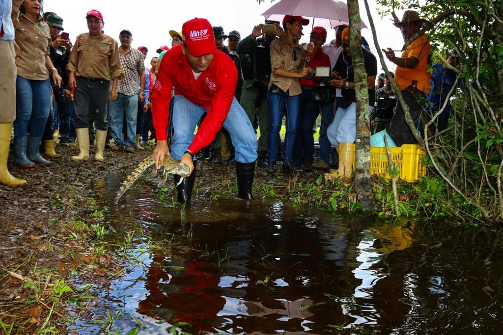 El titular del Minea, Ramón Velásquez Araguayán, participó en el acto de liberación. (Foto (Harrison Ruíz)